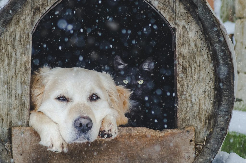 Pokud jste manuálně zruční, zkuste si boudu pro psa vyrobit sami