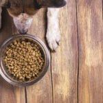 Jak často, čím a jak správně krmit psa?