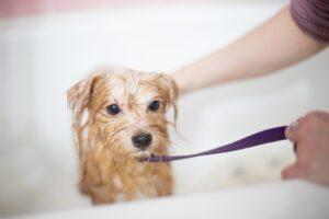 Jak často koupat psa