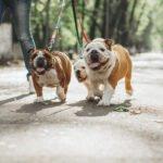 Jak často a jak dlouho venčit psa?