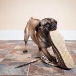 Jak odnaučit štěně kousat?