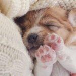 Štěně - péče o štěně krok za krokem