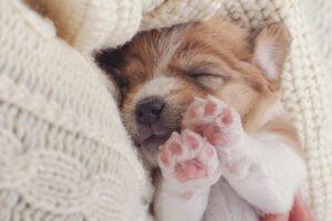 Jak se starat o štěně