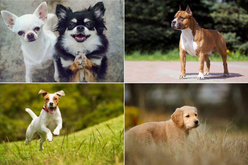 Jak vybrat psa