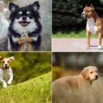 Jak vybrat psa - kompletní průvodce výběrem