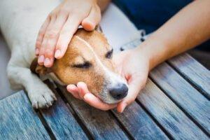 Jak vyvolat zvracení u psa