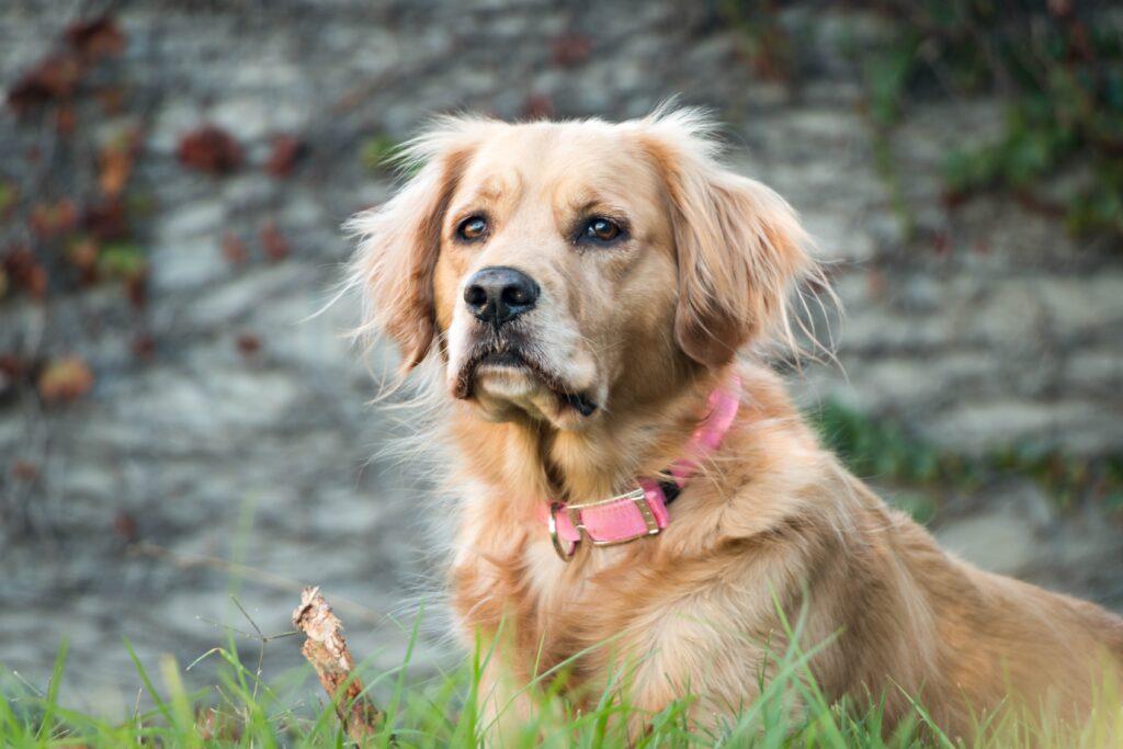 Látkový psí obojek - nylonový