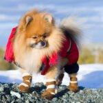 Oblečky pro psy – čím se při výběru řídit?
