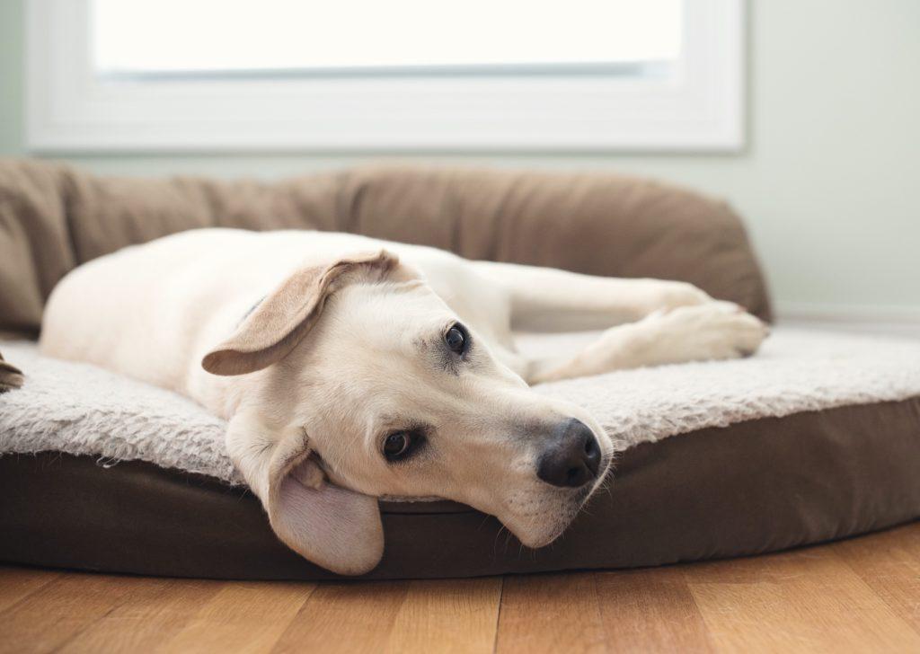 Pelech pro psa s okrajem