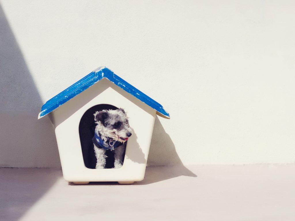 Pes v nájemním bytě