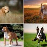 20x pes vhodný k dětem a do rodiny - který pes je nejlepší?