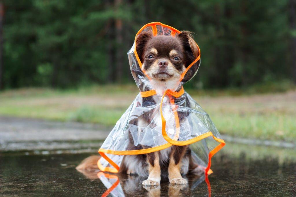 Pláštěnka pro psa