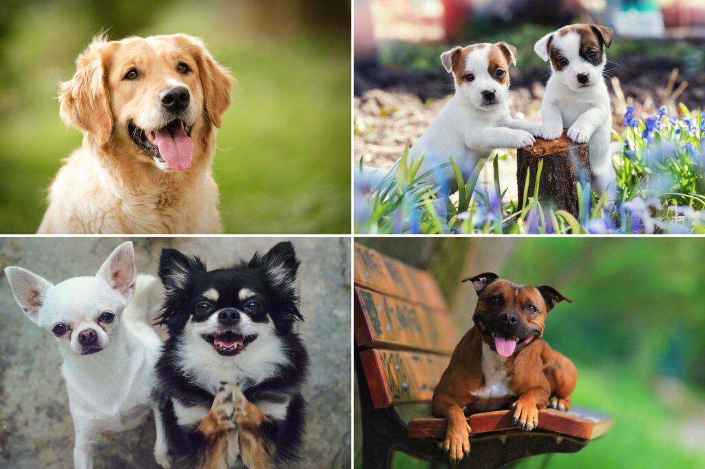 Plemena psů