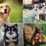 Plemena psů a psí rasy