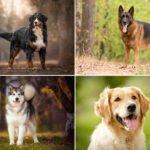 25x nejlepších plemen psů na zahradu