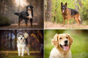 Plemena psů na zahradu