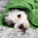 Průjem u psa, jak si s ním poradit?