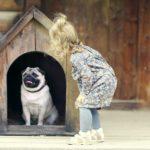 Psí bouda - jak vybrat ideální boudu?