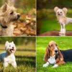 33 nejvhodnějších psů do bytu