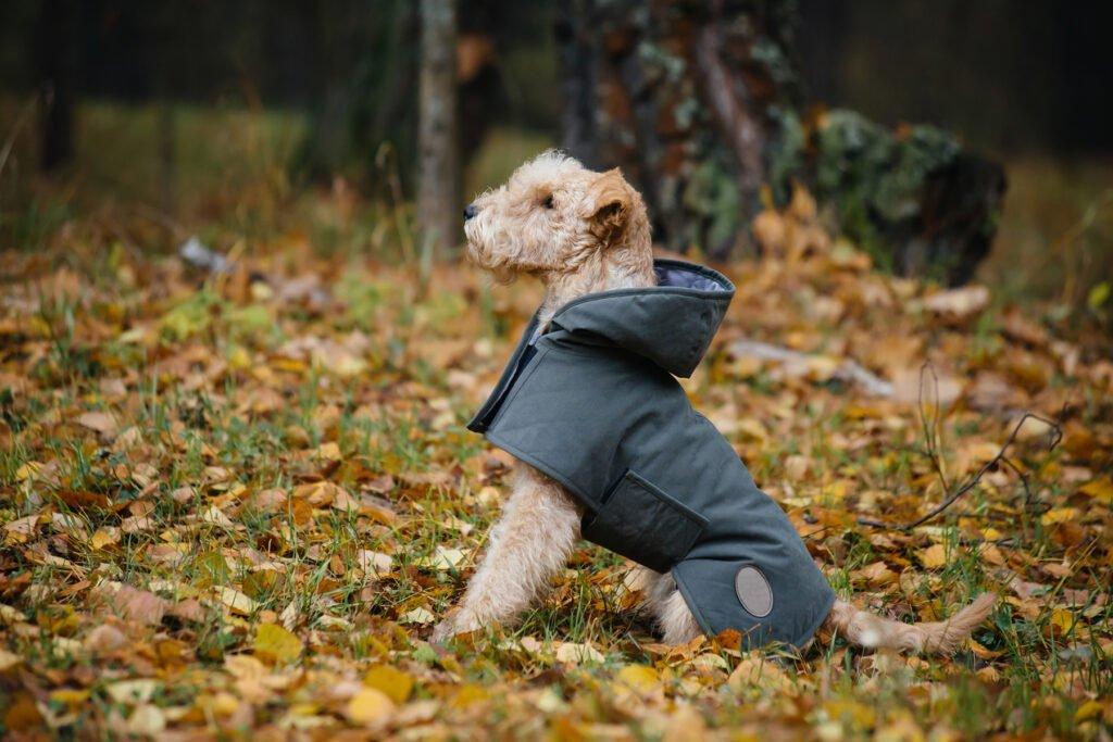 Zateplený obleček pro psy